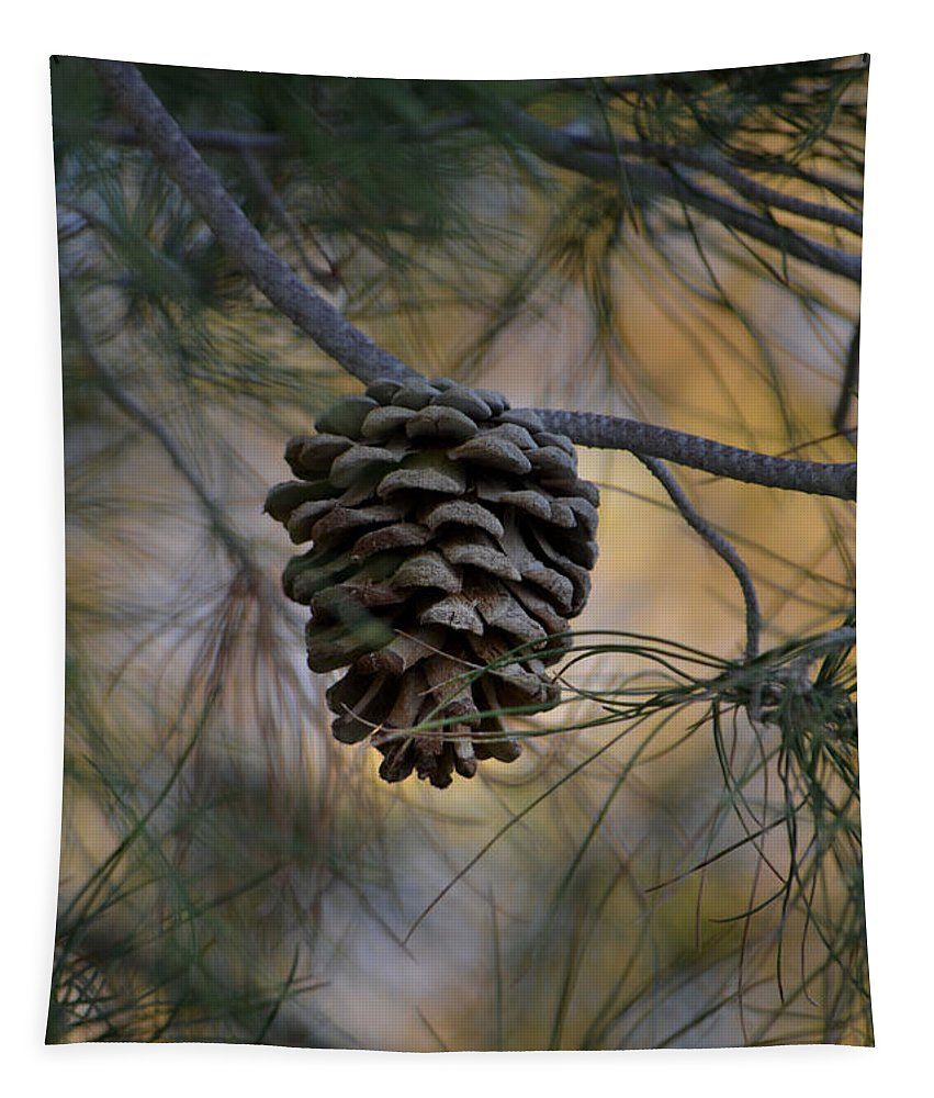Pine Cone Tapestry featuring the photograph Secluded by Deb Halloran