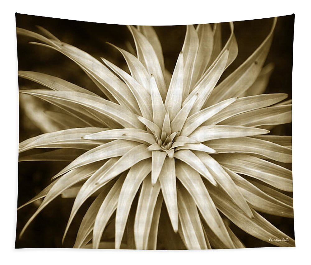 Sepia Tapestry featuring the photograph Sepia Plant Spiral by Christina Rollo