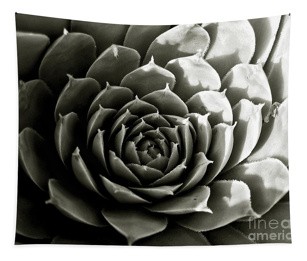 Gray Tapestry featuring the photograph Shades Of Gray by Nina Ficur Feenan