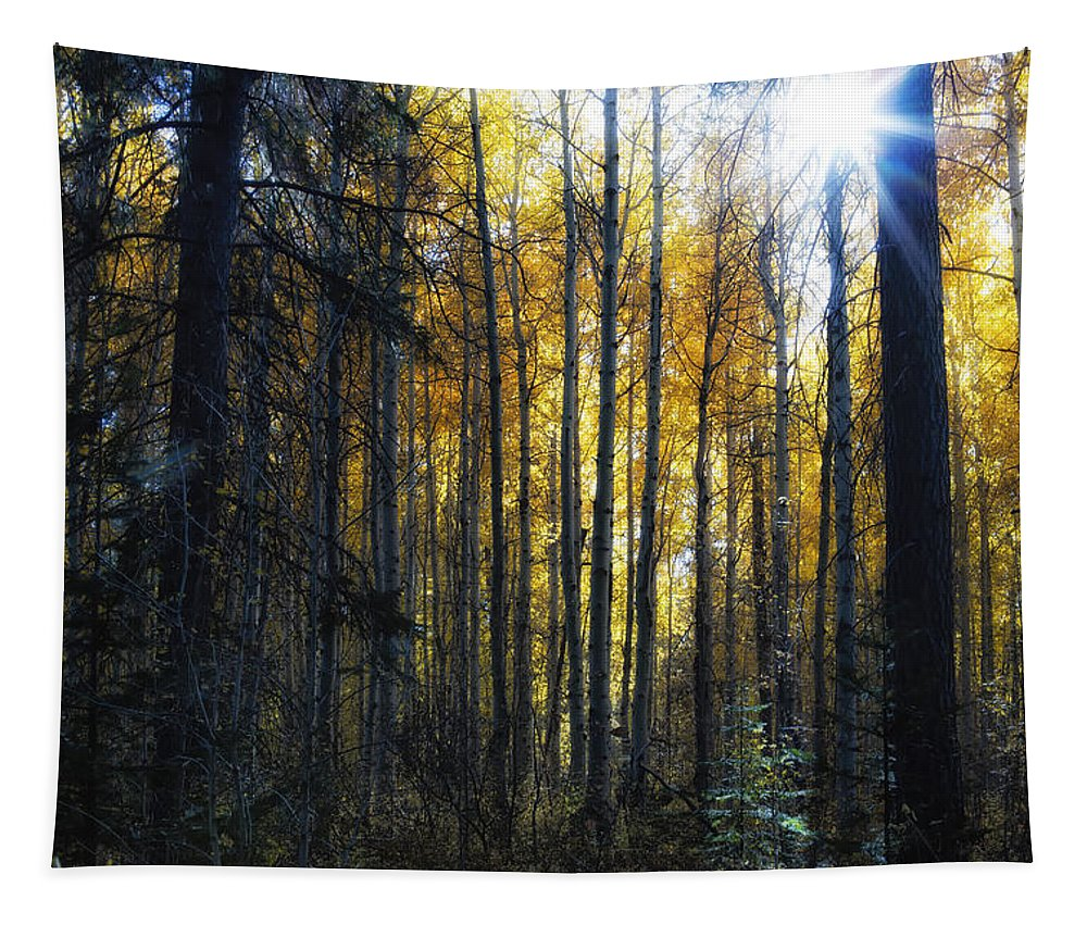 Aspen Tapestry featuring the photograph Shining Through by Belinda Greb