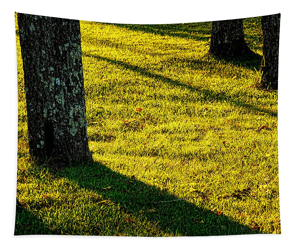 Sunlight Tapestry featuring the photograph Shyness by Olivier Le Queinec