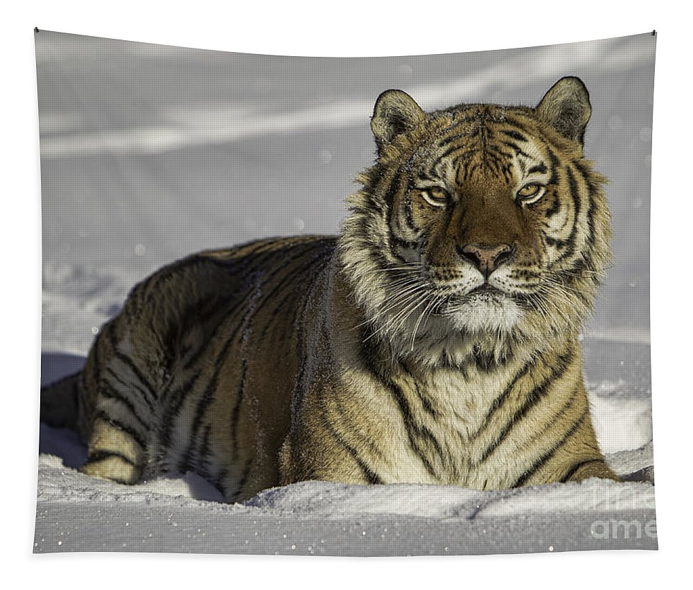 Color Image Photographs Tapestry featuring the photograph Siberian Tiger At Attention by Jerry Fornarotto