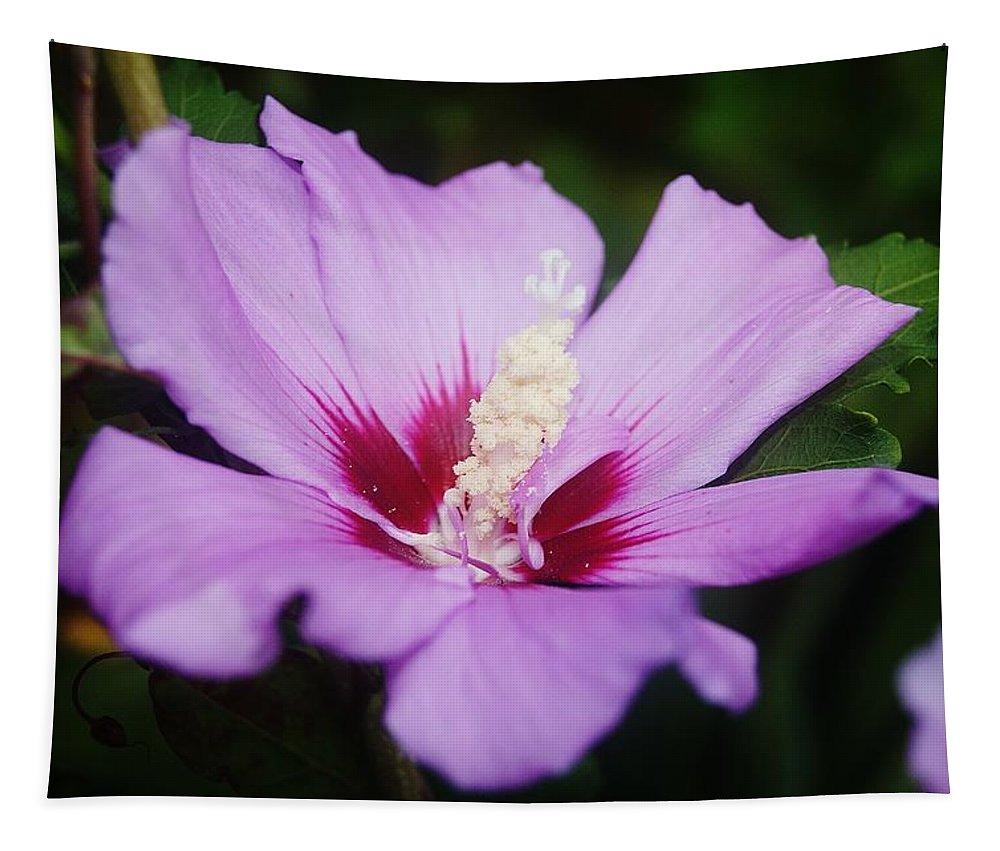 Flower Tapestry featuring the photograph Side Yard Flower 1 by Daniel Thompson