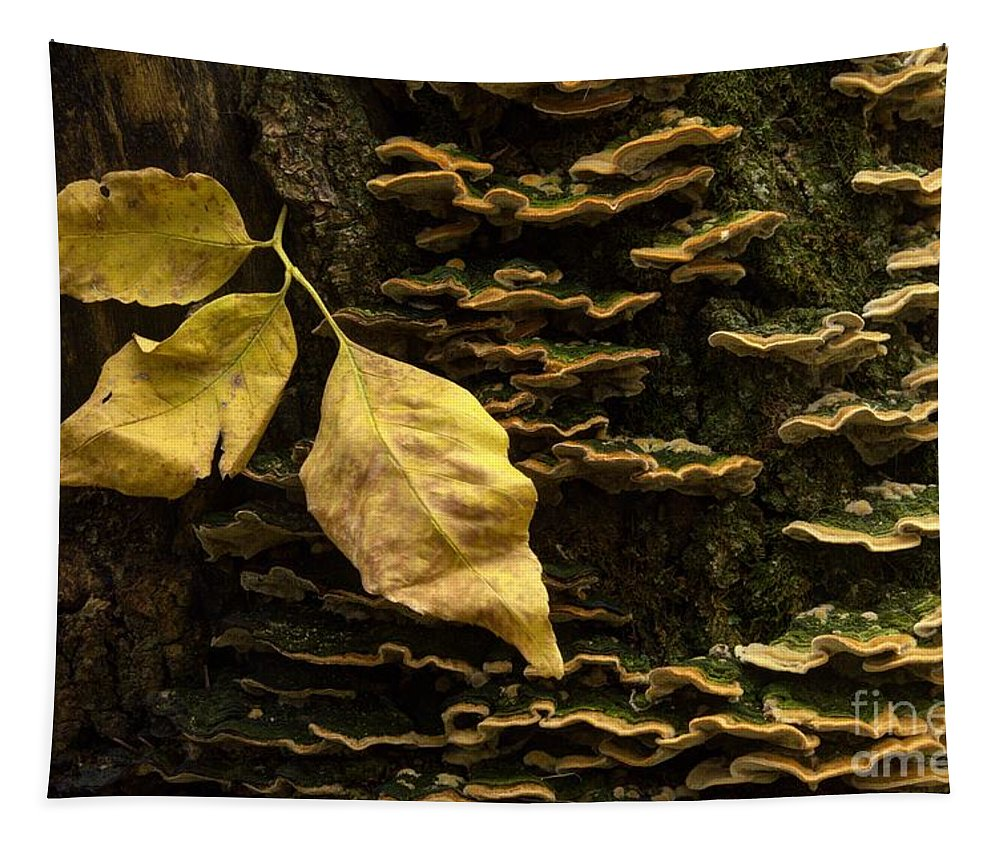 Fungi Tapestry featuring the photograph Signs Of Autumn by Bob Christopher