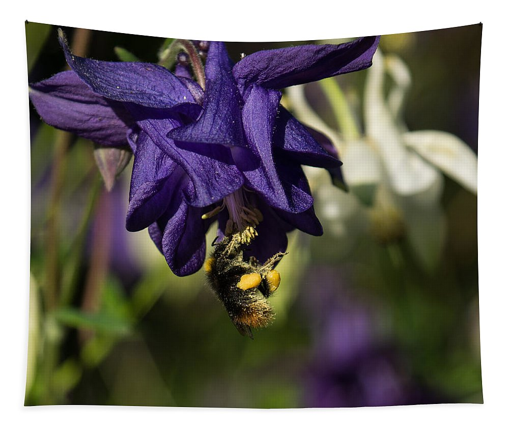 Georgia Mizuleva Tapestry featuring the photograph Silky Blue Columbine And A Busy Bee by Georgia Mizuleva