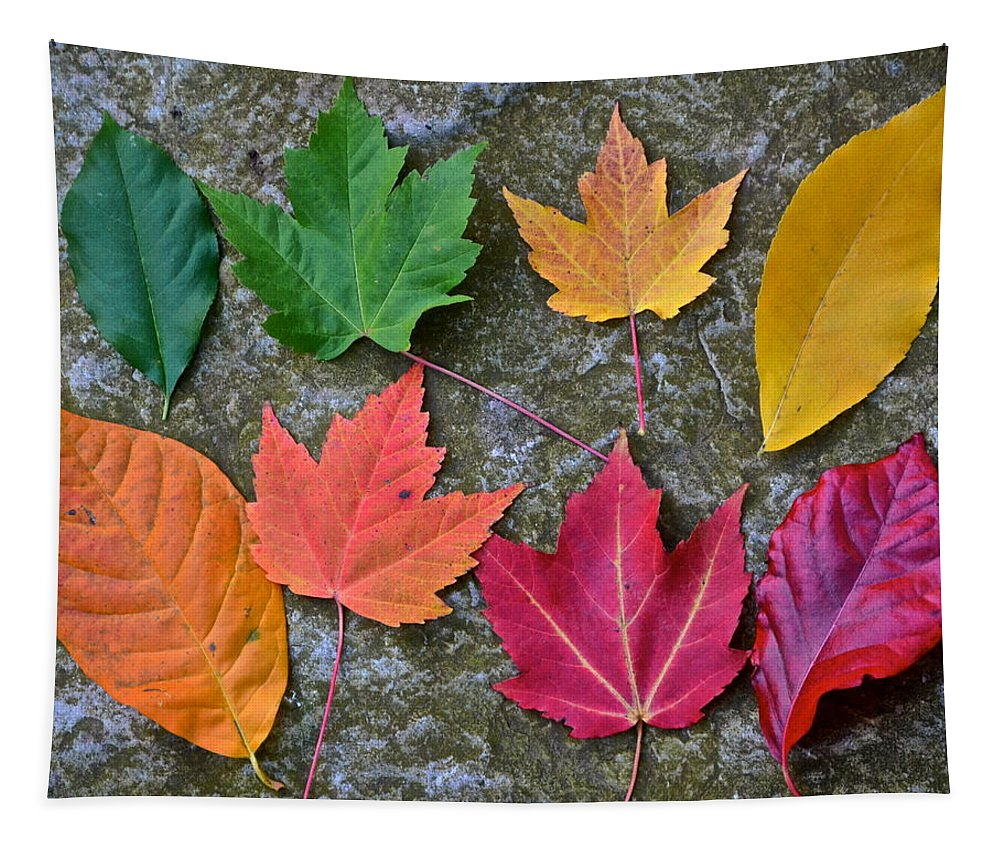 Autumn Tapestry featuring the photograph Similar But Different by Frozen in Time Fine Art Photography