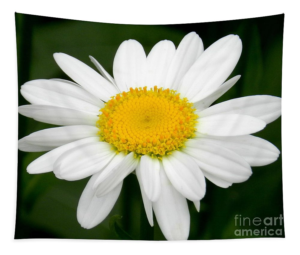 Art Tapestry featuring the photograph Single Daisy by Linda Galok