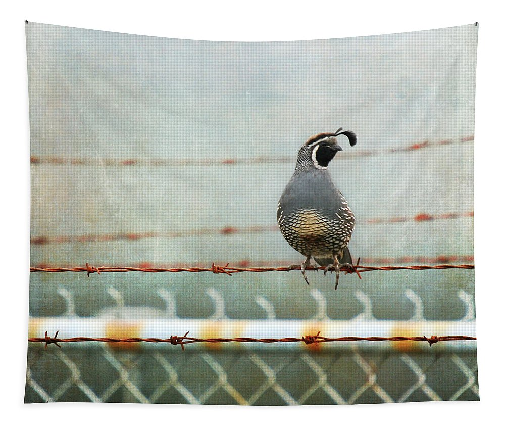 California Quail Tapestry featuring the photograph Sittin' On The Fence by Sher Falls