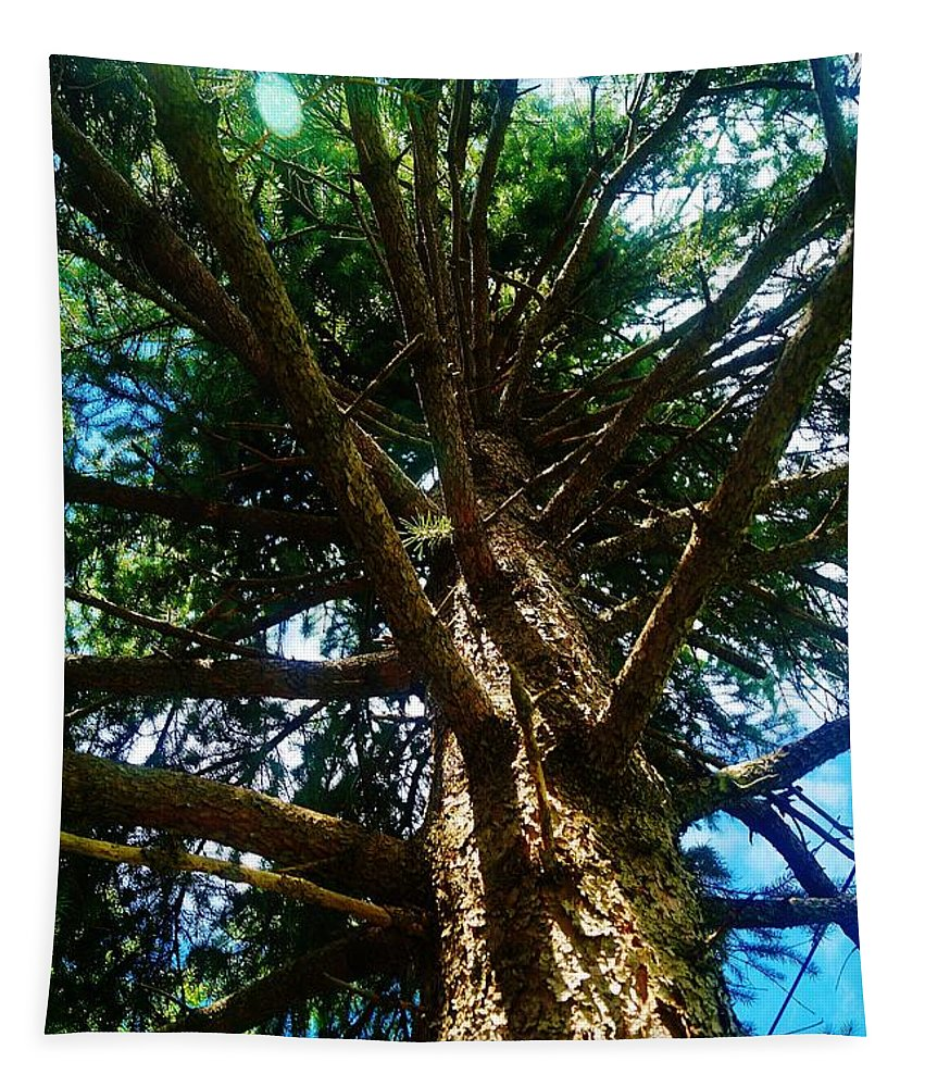 Spruce Tapestry featuring the photograph Skyward Spruce by Daniel Thompson