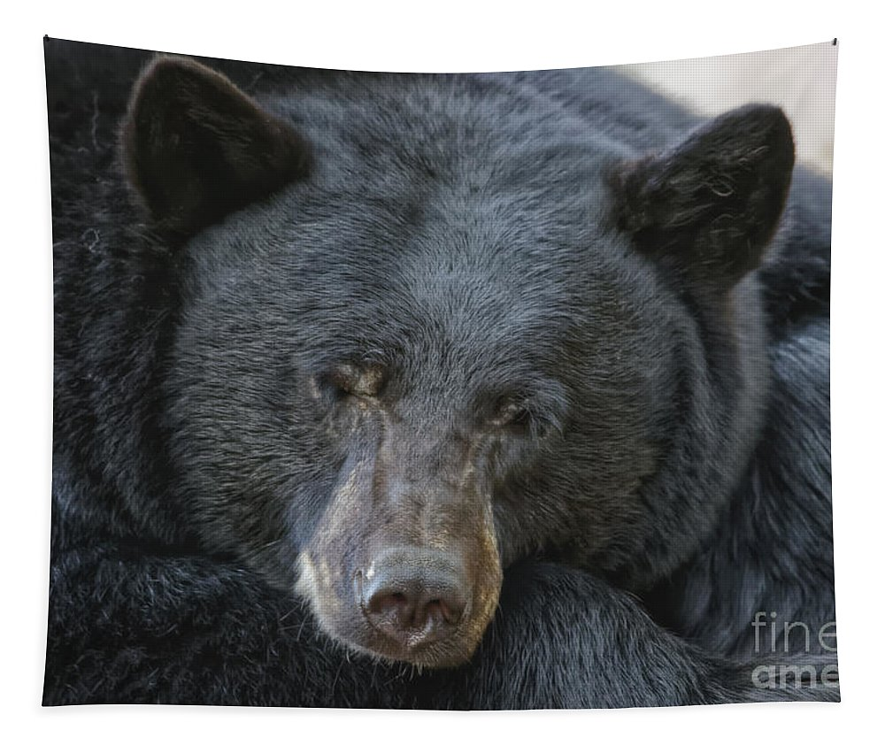 Black Bear Portrait Tapestry featuring the photograph Sleeping Bear by Mitch Shindelbower