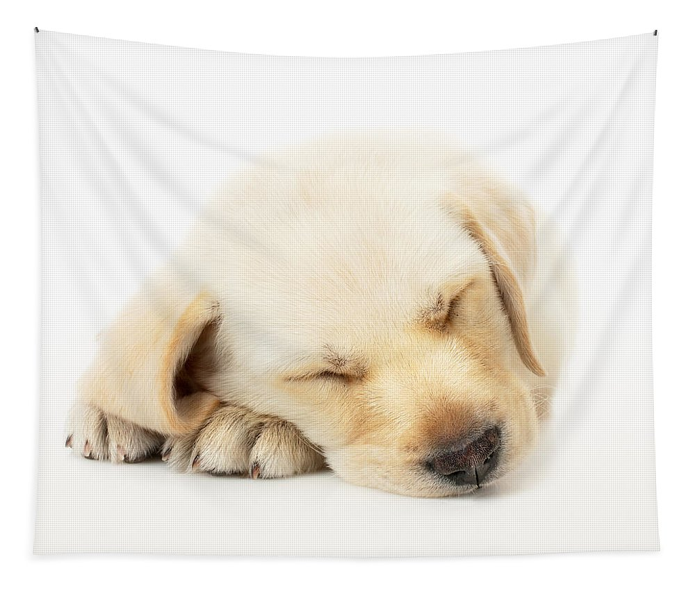 Adorable Tapestry featuring the photograph Sleeping Labrador Puppy by Johan Swanepoel