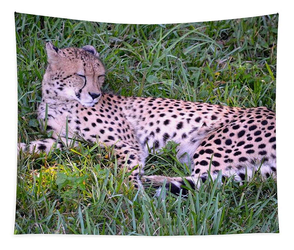 Spot Tapestry featuring the photograph Sleepy Cheetah by Richard Bryce and Family