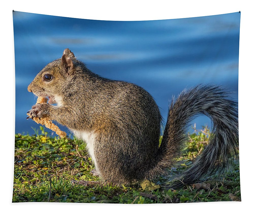 Lafeyette Park Tapestry featuring the photograph Snack Time by Steve Harrington