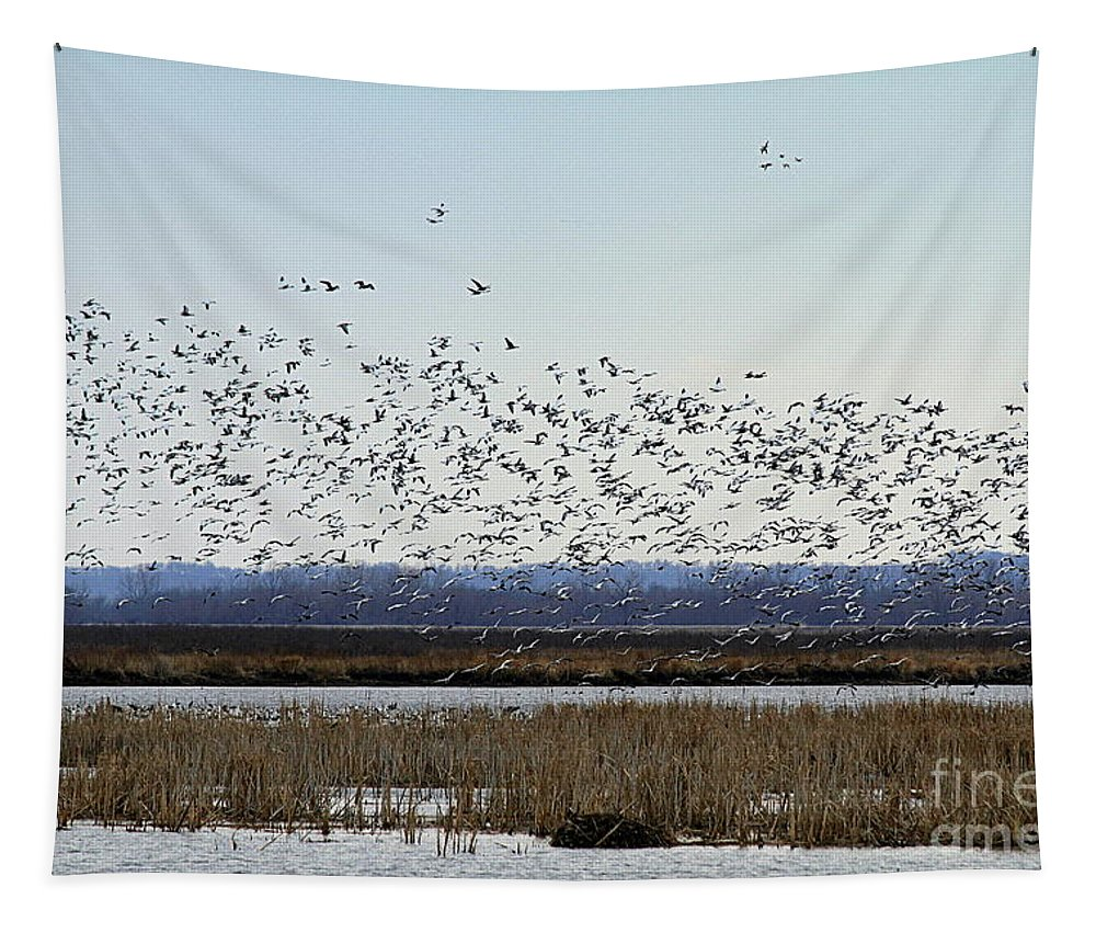 Snow Geese Tapestry featuring the photograph Snow Geese Taking Off At Loess Bluffs National Wildlife Refuge by Catherine Sherman