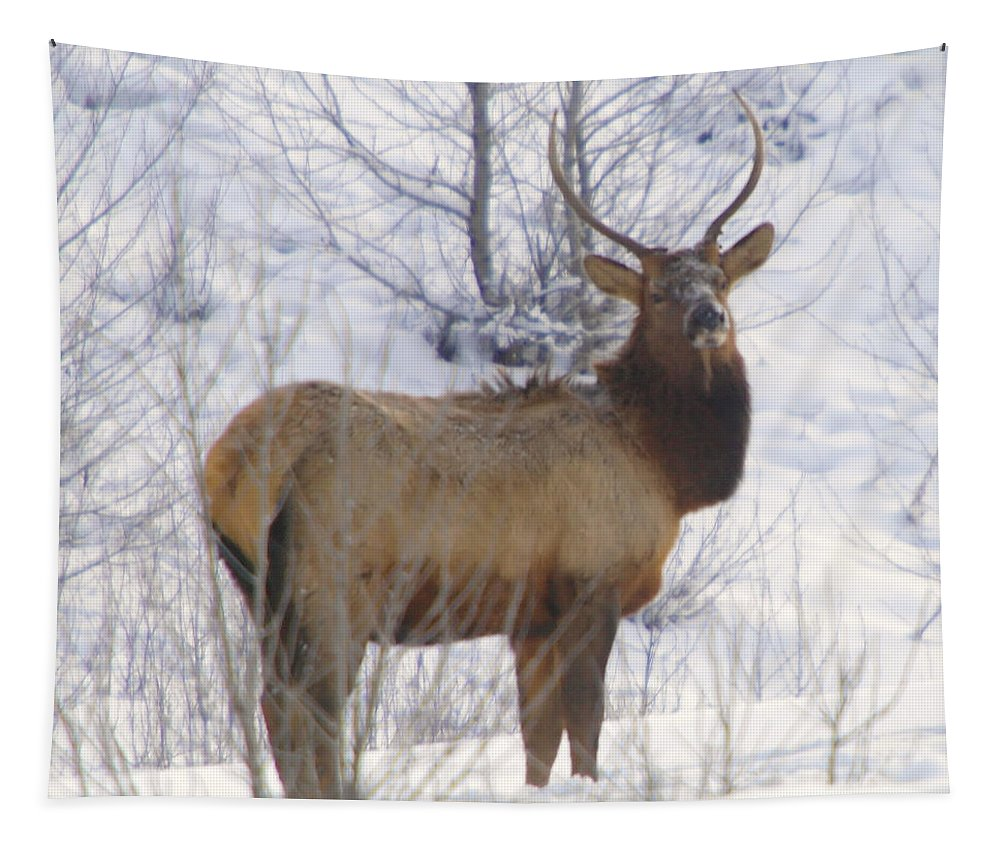 Elk Tapestry featuring the photograph Snow In The Face by Jeff Swan
