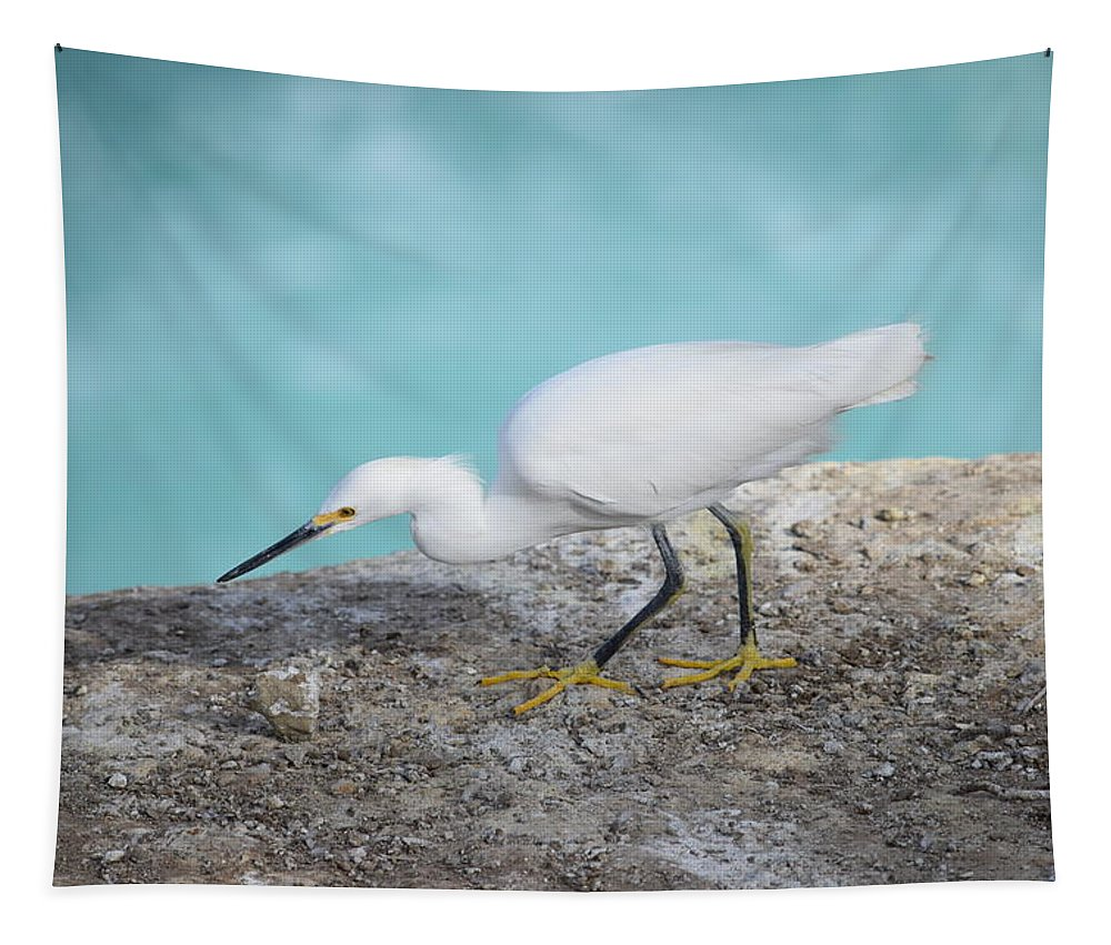 Snowy Egret Tapestry featuring the photograph Snowy Egret by Eric Johansen