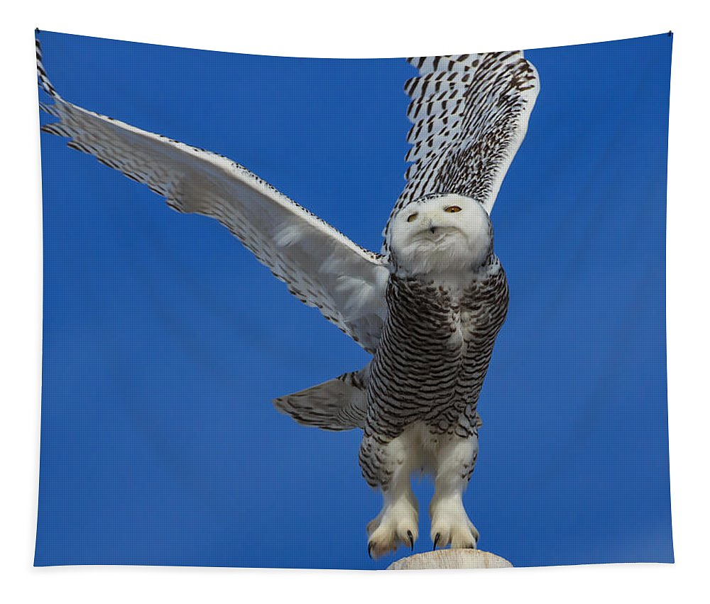 Snowy Owl Tapestry featuring the photograph Snowy Owl Taking Flight by Everet Regal