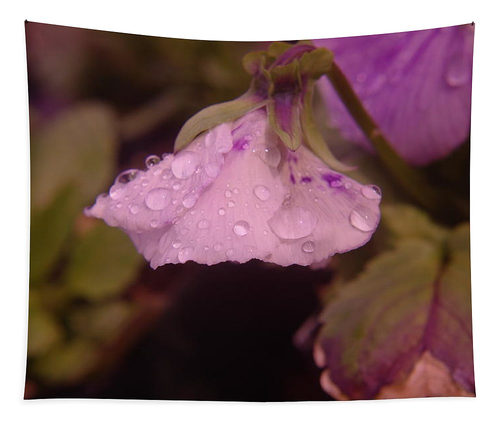 Water Tapestry featuring the photograph Soft Rain On A Flower by Jeff Swan