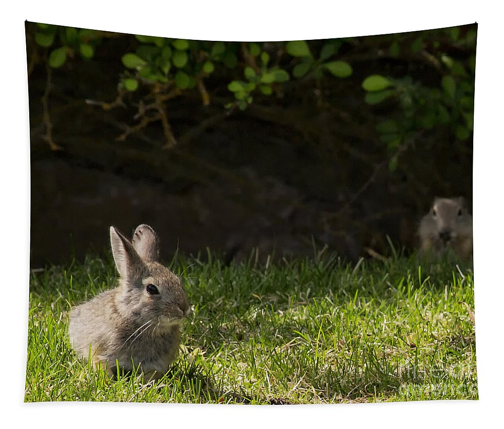 Rabbit Tapestry featuring the photograph Someone's Watching Me by Belinda Greb