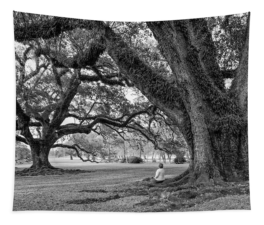 Oak Alley Plantation Tapestry featuring the photograph Southern Dreamer Bw by Steve Harrington