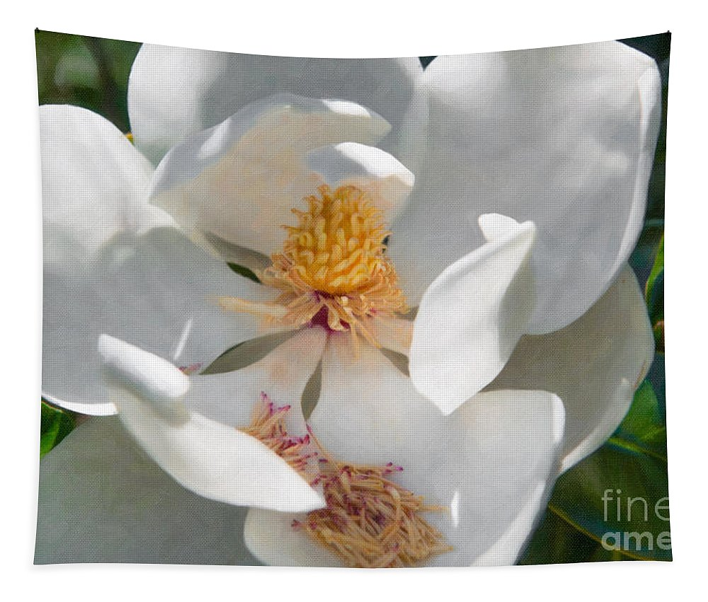 Southern Tapestry featuring the photograph Southern Magnolia Blossom by Dale Powell