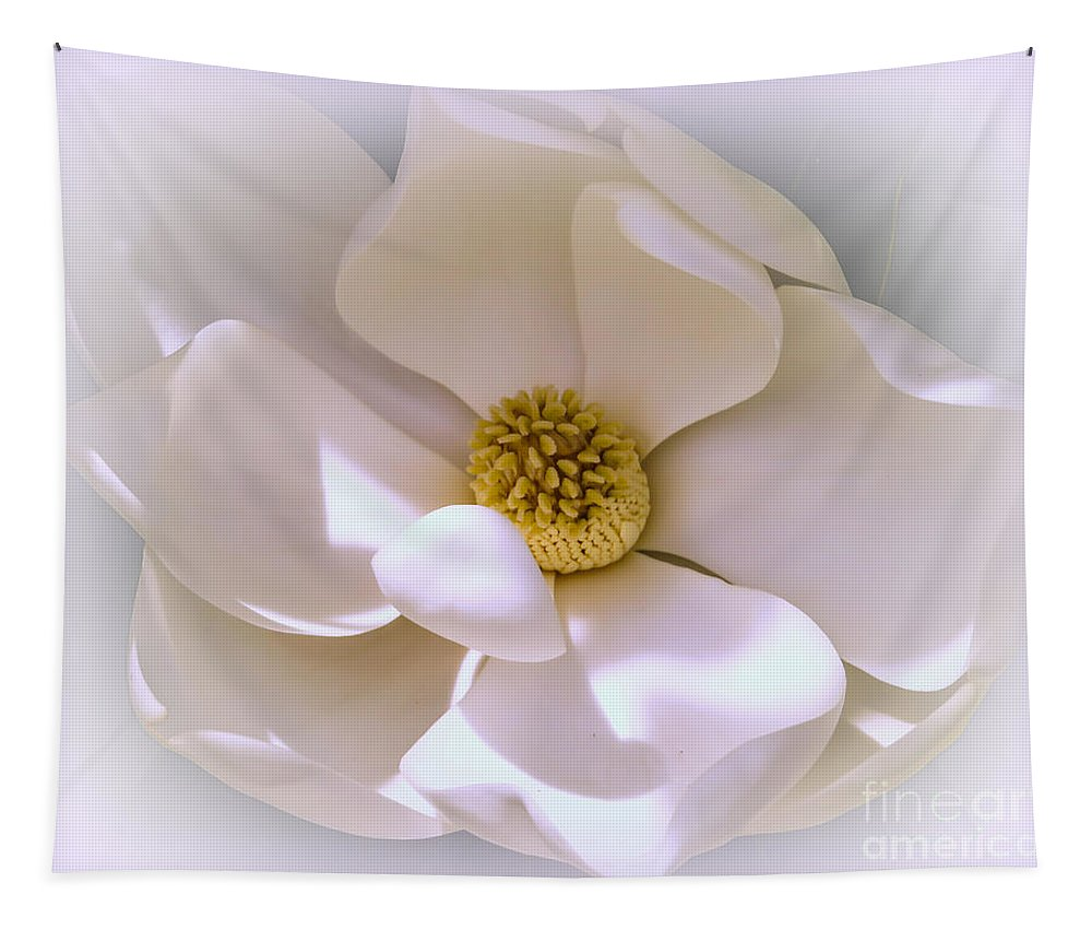 Magnolia Tapestry featuring the photograph Southern Magnolia by Zina Stromberg