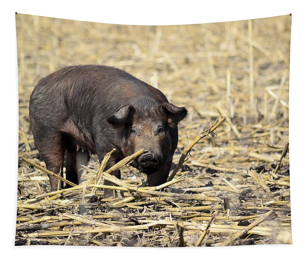 Sow Tapestry featuring the photograph Sow In The Field by Bonfire Photography