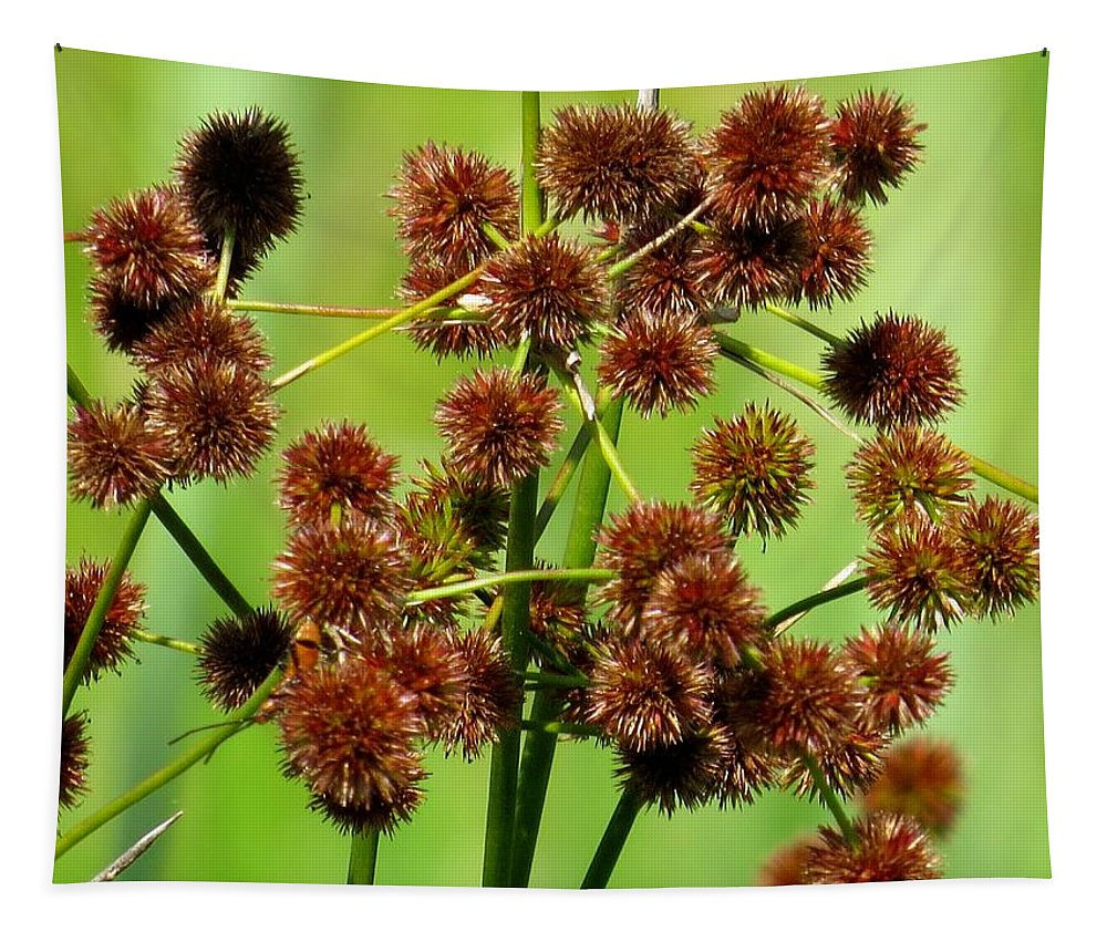 Bur-reed Tapestry featuring the photograph Sparganium by Zina Stromberg