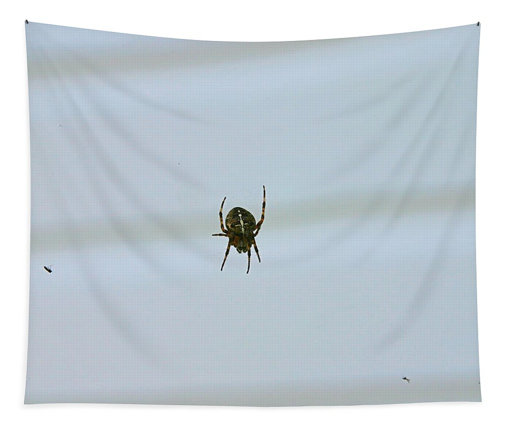 Spider Tapestry featuring the photograph Spider And Snacks by Hugh Carino