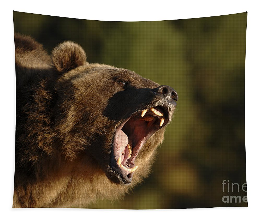 Grizzly Bear Tapestry featuring the photograph Spine Chiller by Wildlife Fine Art