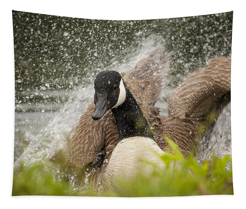 Canada Goose Tapestry featuring the photograph Splishing And Splashing by Karol Livote