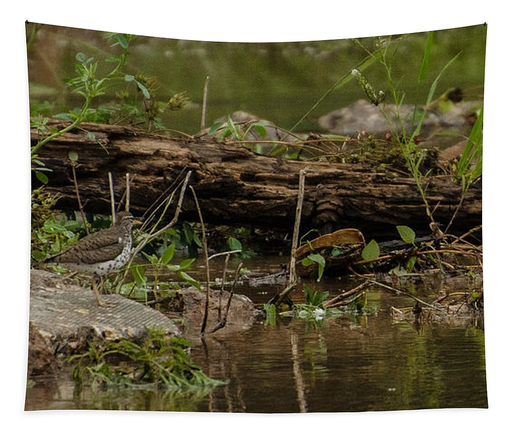 Bird Tapestry featuring the photograph Spotted Sandpiper 2 by Donna Brown