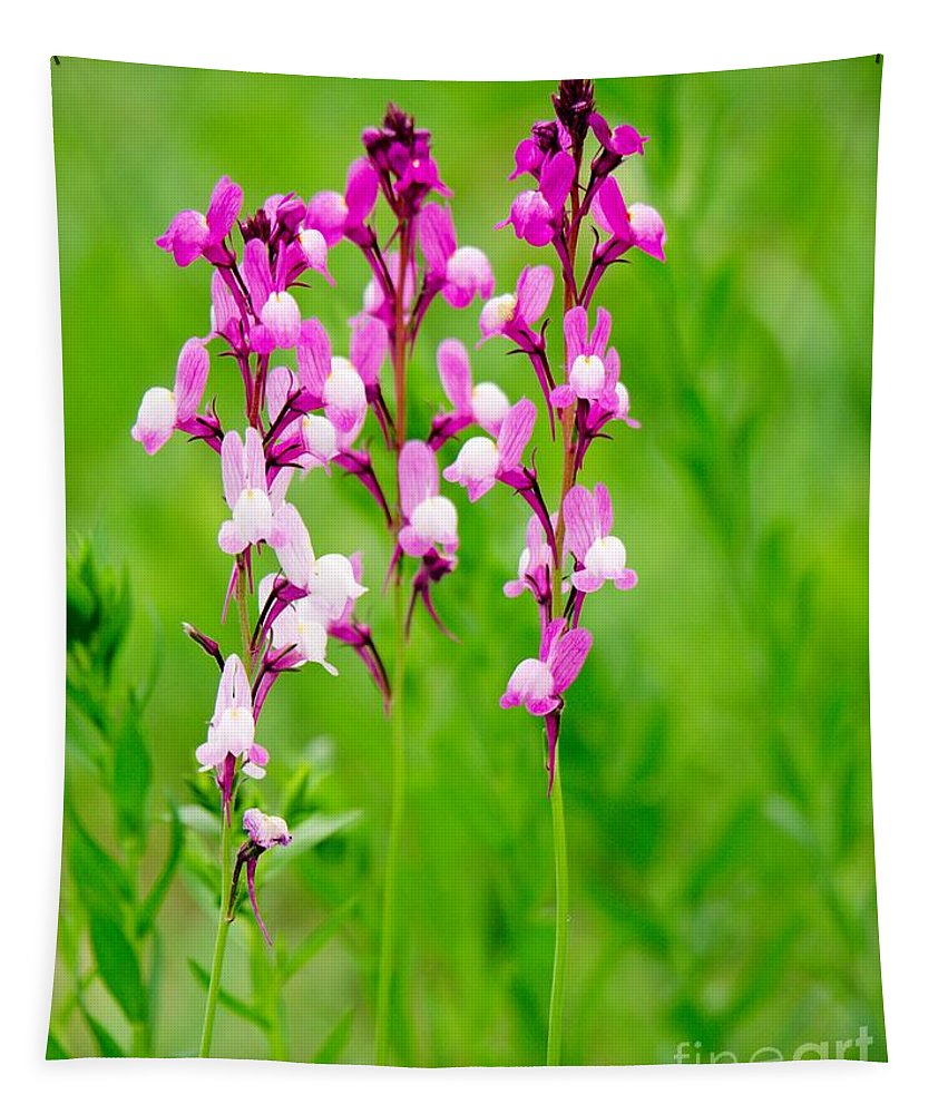 Spring Tapestry featuring the photograph Spring Flowers by Gary Richards
