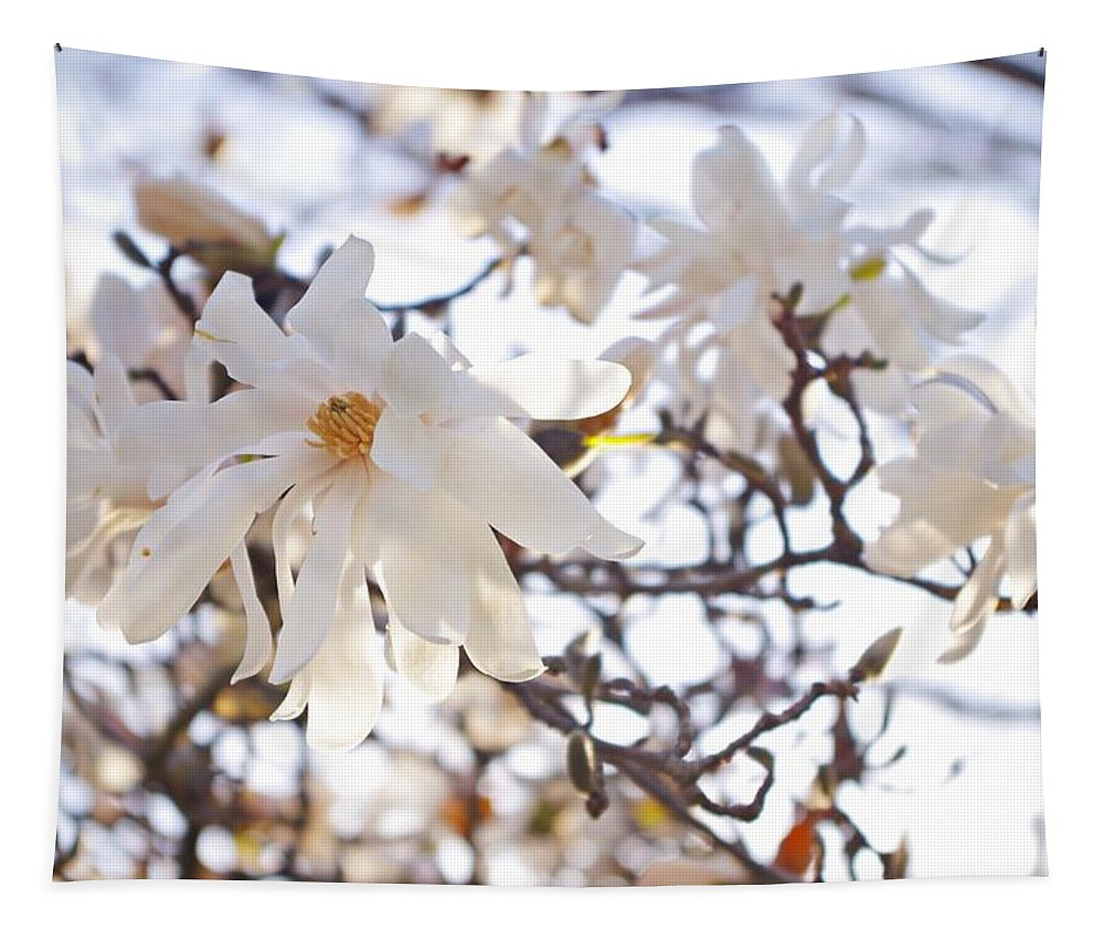Magnolia Stellata Tapestry featuring the photograph Spring Flowers by Sharon Popek