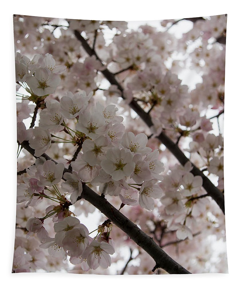 Beautiful Tapestry featuring the photograph Spring Is Beautiful - A Cloud Of Pastel Pink Blossoms by Georgia Mizuleva