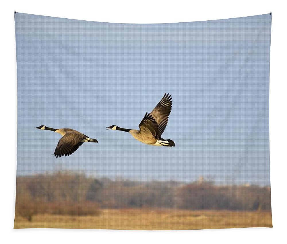 Geese Tapestry featuring the photograph Springing To Flight by Bonfire Photography