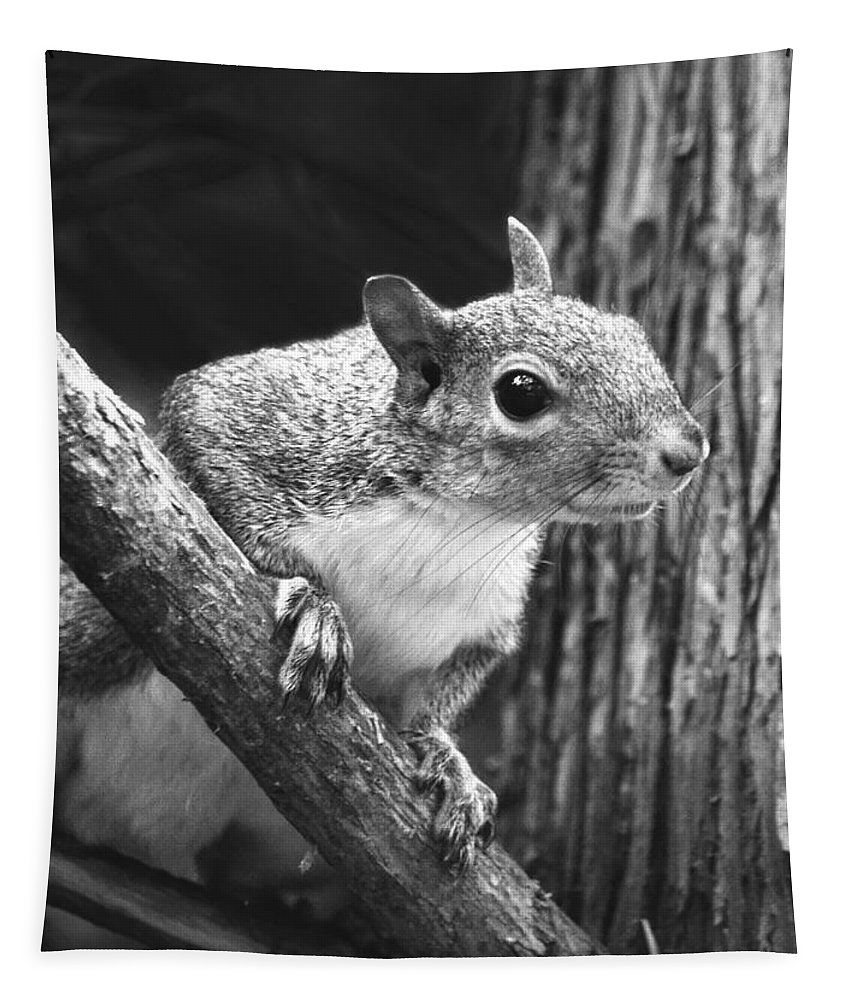 Eastern Squirrel Tapestry featuring the photograph Squirrel Black And White by Sandi OReilly