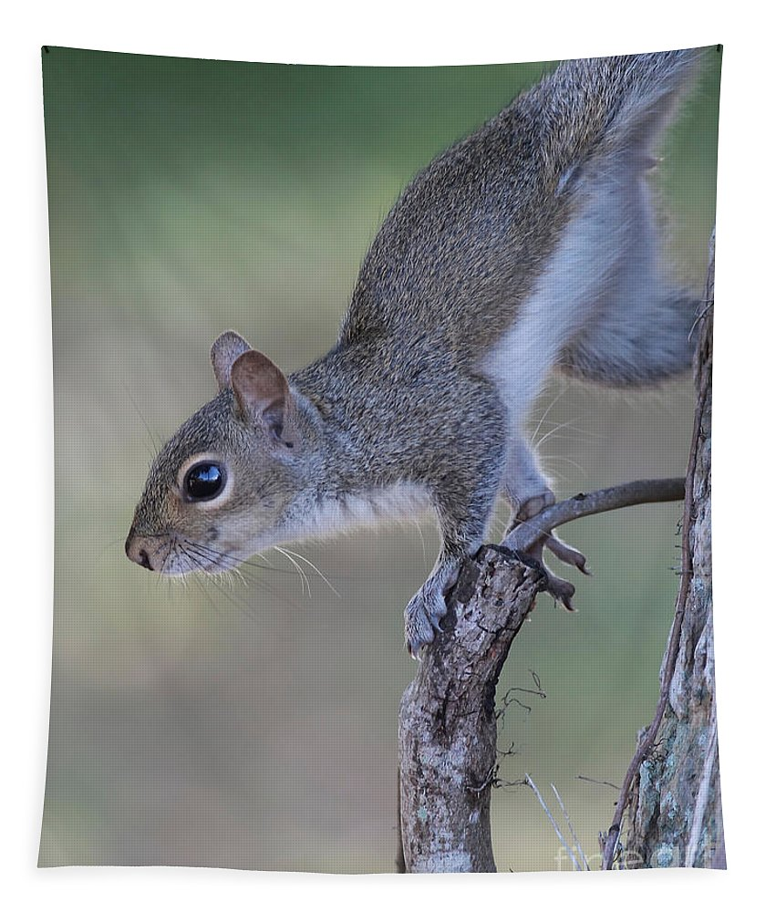 Squirrel Tapestry featuring the photograph Squirrel Pose by Deborah Benoit