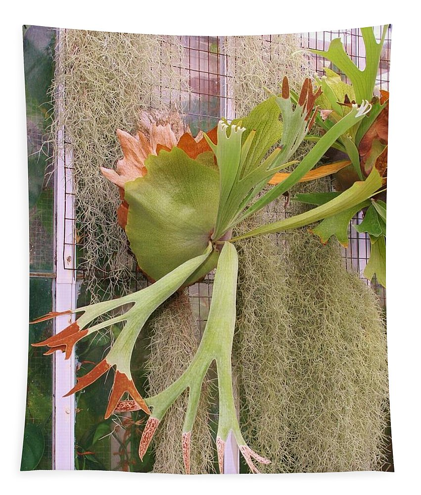 South America Tapestry featuring the photograph Staghorn Fern by Karen Silvestri