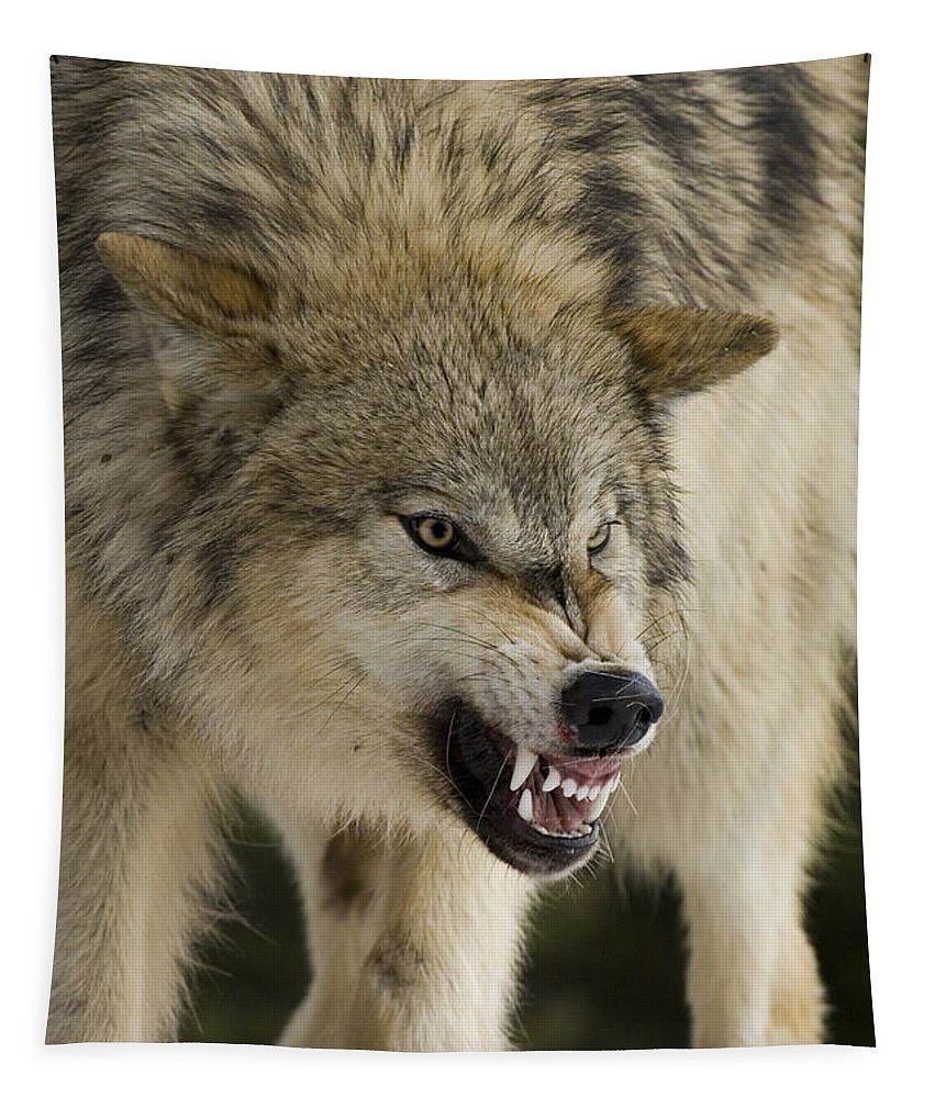 Wolf Tapestry featuring the photograph Stand Off by Wildlife Fine Art