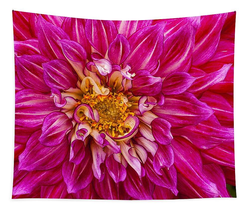 Dahlia Tapestry featuring the photograph Standard Beautiful Dahlia by Jean Noren