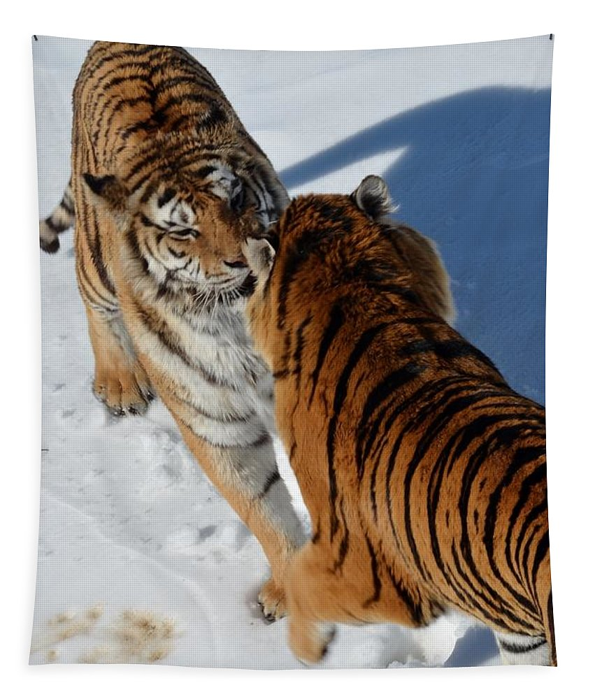 Tiger Tapestry featuring the photograph Standoff by Paulina Roybal
