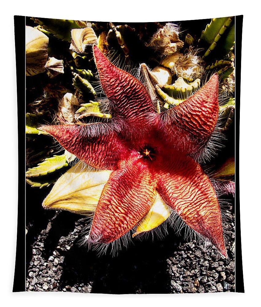 Stapelia Grandiflora Starfish Cactus Tapestry featuring the photograph Stapelia Grandiflora Starfish Cactus by Weston Westmoreland