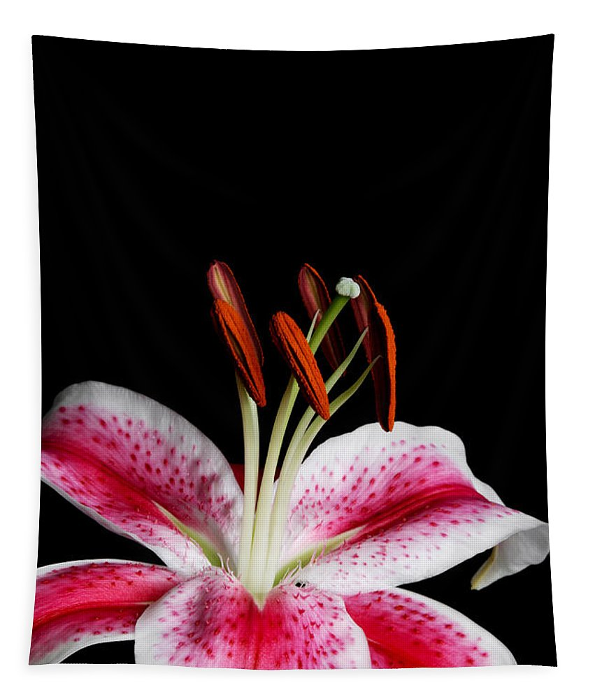 Stargazer Lily Tapestry featuring the photograph Stargazer by Judy Whitton