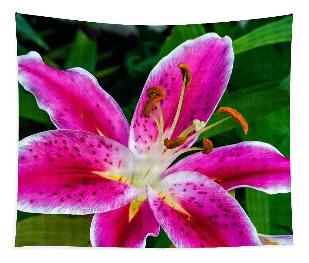 Bolton Tapestry featuring the photograph Stargazer Oriental Lily by Steve Harrington