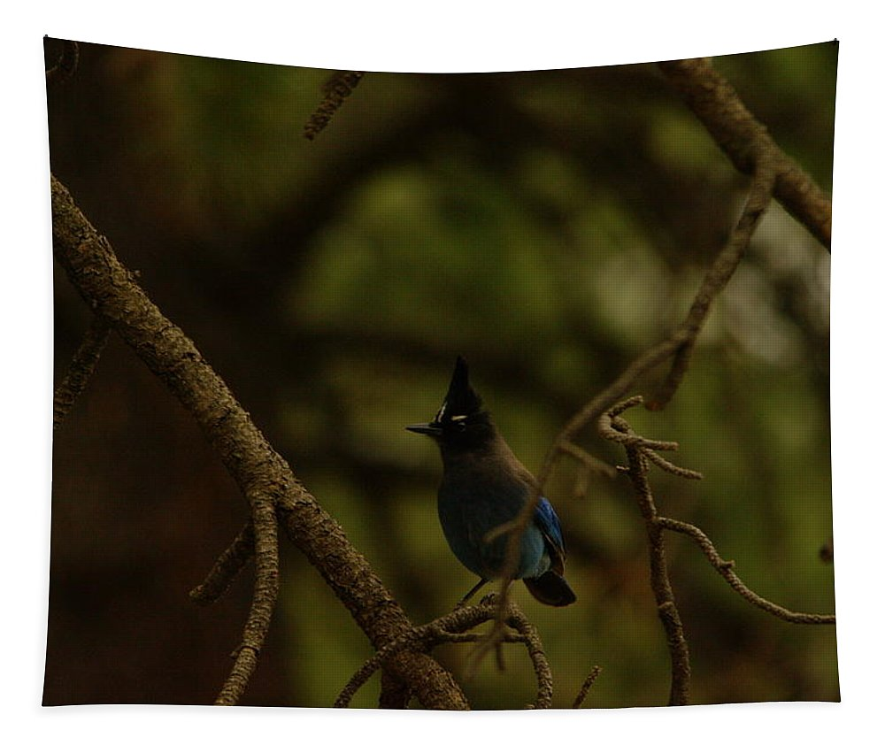 Birds Tapestry featuring the photograph Steller Jay by Jeff Swan