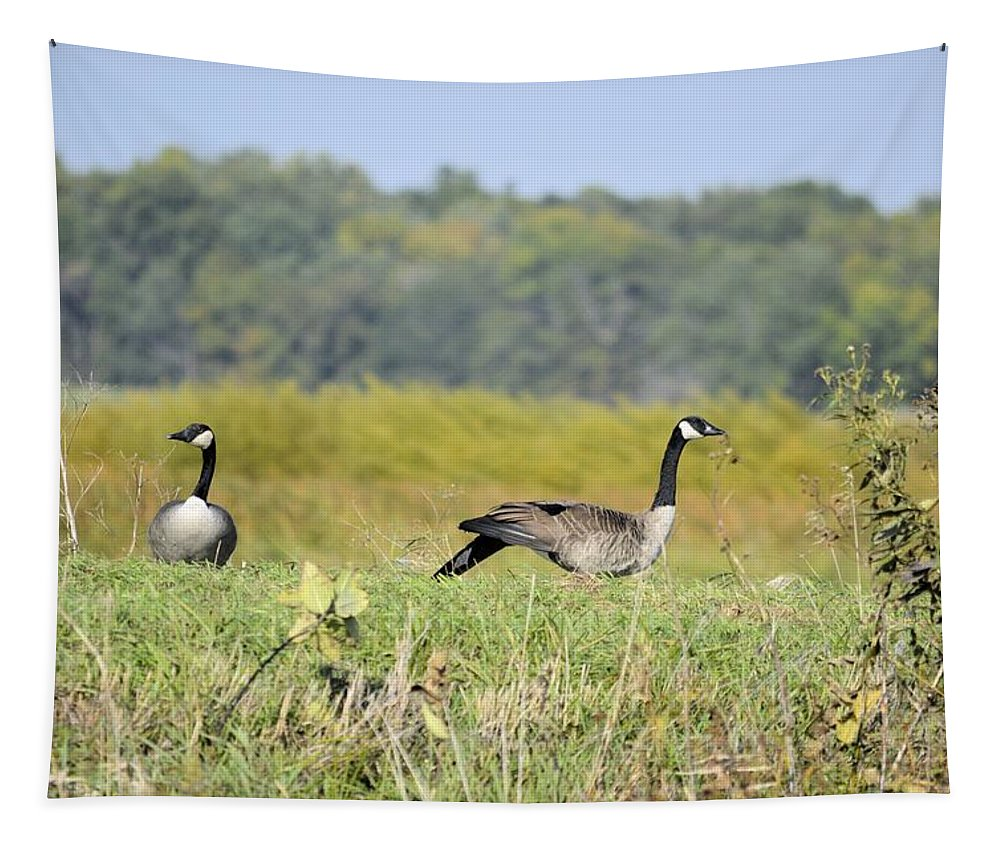 Goose Tapestry featuring the photograph Stretching Out by Bonfire Photography
