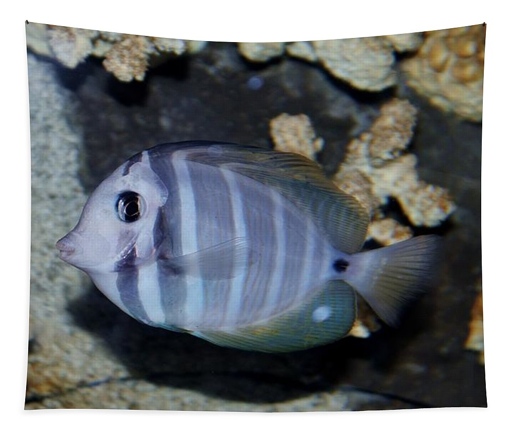 Underwater Tapestry featuring the photograph Striped Fish by Cynthia Guinn