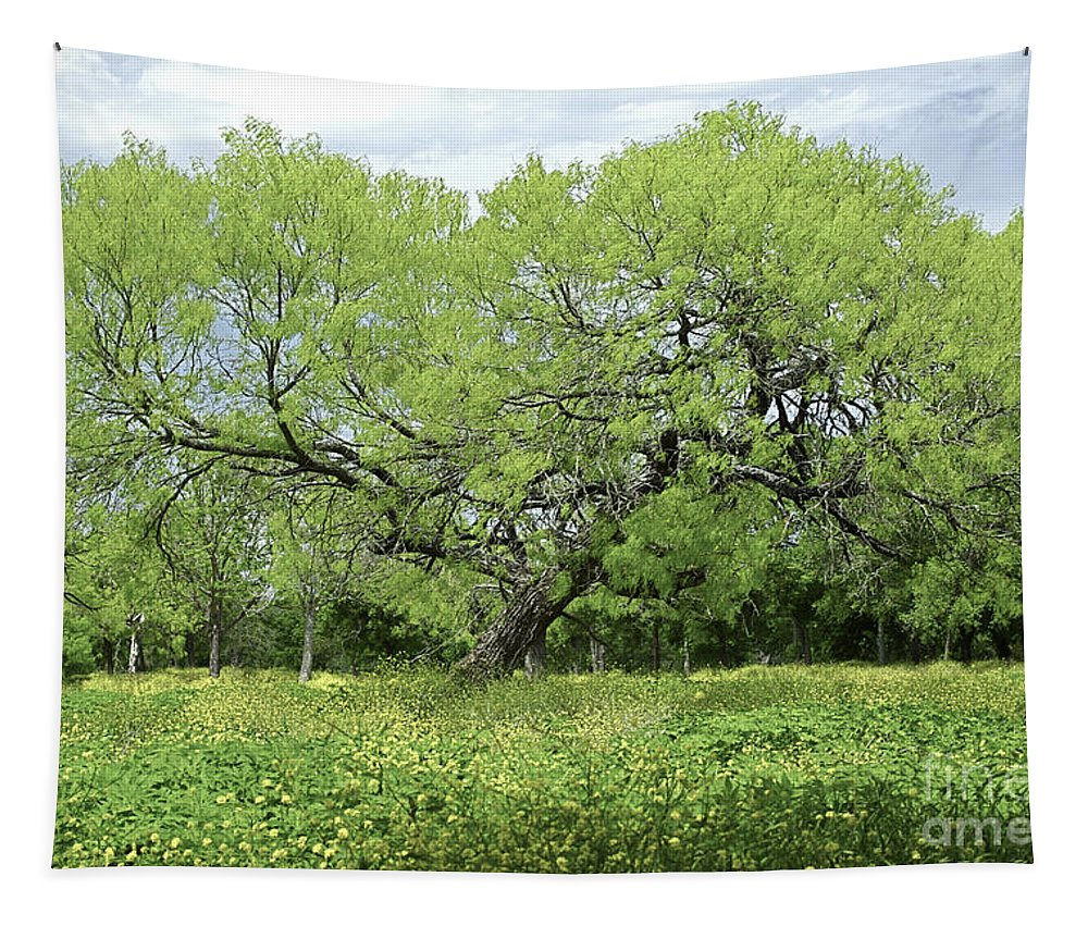 Mesquite Tapestry featuring the photograph Summer Mesquite Tree by Gary Richards