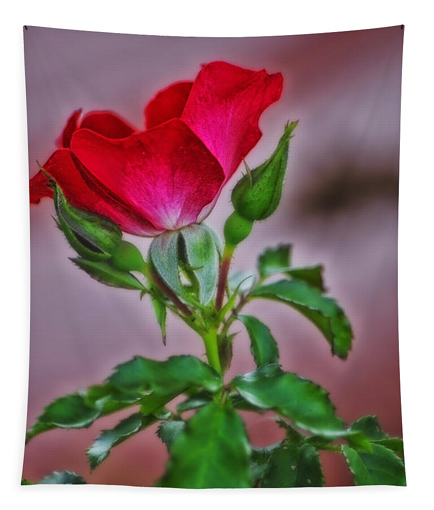 Rose Bud Tapestry featuring the photograph Summer Rose by Thomas Woolworth